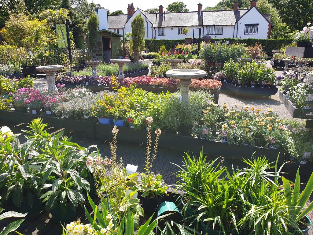 Port Sunlight Garden Centre Plant Area