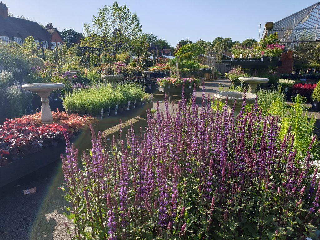 Port Sunlight Garden Centre plants
